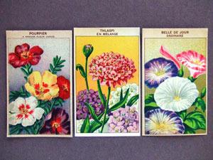 フランスの1920年代の種の袋に貼られていたラベル3枚セットです。未使用です。  お花がとても美しく描かれています。そのままフレームにいれて飾っても素敵です。もちろんラッピングやコラージュなどにも大活躍してくれますよ。 他にも色々なお花のラベルがございます。是非ご覧ください。  ※古い物ですので経年による傷みや日焼けなど見られる場合がございます。ご理解の上でご購入下さいませ。