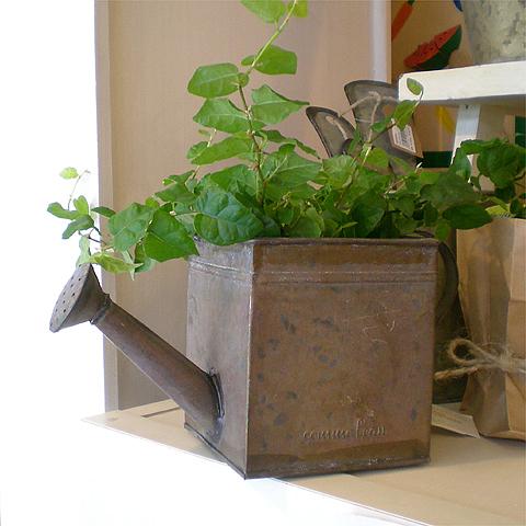 心ウキウキの春♪でもホントはちょっと寂しかったり・・・。そんな時は可愛い雑貨とグリーンがアナタの心を癒します♪お部屋にグリーンがあるとないとでは大違いです!是非お試し下さいね!!